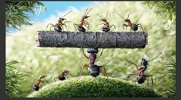 螞蟻互相占領城堡的游戲
